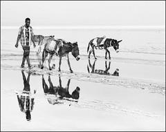 donkey caravan through the danakil (nahlinse) Tags: film travel ethiopia danakil desert donkeys animals people film:name=kodaktrix400