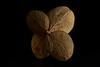 hydrangea petals (Marc McDermott) Tags: macromondays macro lowkey hydrangea dry dried plant texture petals