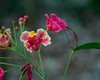 Flamboyant. (Livia Feitosa) Tags: flor flamboyant flora parquemunicipal parque brasil nordeste nikkorlens nikond7100 nikonphotos nikon d7100 18105mm natureflow flower garden
