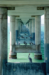Under the Bridge (cosmosjon) Tags: bridge green water birds architecture keys vanishingpoint florida marathon pelican sevenmilebridge 7milebridge jonathansabin