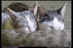 PICT0114 (Noelas) Tags: cat minolta taiwan 2006 neko taipei 猫 07 ねこ 貓 生態 100macro 牛伯伯 feralcats 街貓 dynax5d 牛伯伯生態園區 alpha10028macro