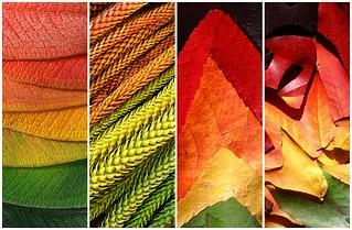 leaf rainbows
