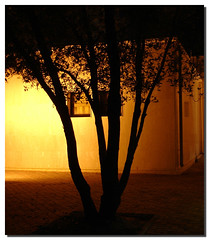 night shadows (Khalid AlHaqqan) Tags: shadow tree yellow night lights kuwait q8
