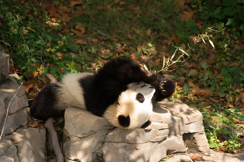 Kickin' Back, Enjoying some Bamboo