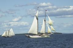 Windjammer Festival (146).jpg (Tandem Guy) Tags: sailing camden maine newengland tallships mercantile penobscott