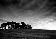 kettledrum clouds (Ray Byrne) Tags: trees blackandwhite bw field clouds landscape grey north monotone alnwick northumberland canon350d northeast beaten kettledrum landscapephotography raybyrne planished byrneout byrneoutcouk webnorthcouk