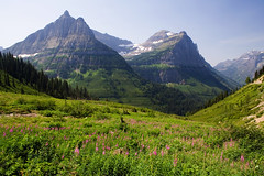 Alpine Scenery (Robby Edwards) Tags: vacation mountains nationalpark montana meadow glacier alpine wildflowers glaciernationalpark payitforward goingtothesunroad specland specnature abigfave