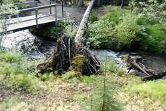 DSC_0243 (usbhub27) Tags: trail yukon boreal