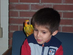 Zeke & David (do not be afraid) Tags: cute brick parrot couch indoors nervous shoulder littleboy apprehensive