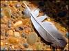 Otoño (jose_miguel) Tags: españa color luz miguel topv111 digital canon spain jose ixus marrakesh pluma 55 suelo piedra instantfave 25faves abigfave artlibre