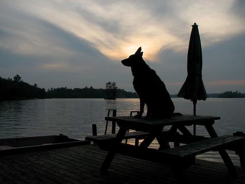 Lucy, Steenburg Lake.