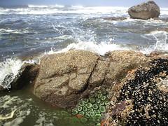 more beach four (tbone_sandwich) Tags: ocean usa nationalpark tide olympicpeninsula sealife pacificocean shore olympic washingtonstate olympicnationalpark tidepool tidal kalaloch crashingwaves beach4