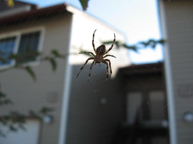 Afternoon Spider