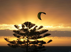 Flying Above The Tree (stefan-23) Tags: sunset sun tree beach water lumix wind 2006 panasonic surfboard adelaide henley 10faves fz7 123faves windboarding