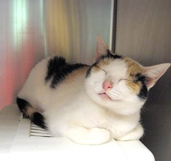 Sweetie Little Calico Cat - Contentedly Sleeping (Pixel Packing Mama) Tags: wow catwomen lovely1 adorable catalog awww catsandkittensset catscatscats flickrwow catloaves heartlandhumanesociety flickrcat sleepycats beautifulcats happycats smilingcats pixelpackingmama meowscollector catnappurrrrr catssmalltobig dorothydelinaporter favorites10 worldsfavorite welovelatte flickrcats tobysgroupies catcentury justmoggies 1025favoritesonly catscookiecatfriends furryfun bonzag favoritedpixset mostinterestingaccordingtoflickralgorithmset spcacatspool spcacats cc4200 kittycatpeople greatpixgallery10favespool wowaddonlypicturescommentedwithawowpool wowiekazowiepool 10favoritescatspool reallyunlimitedpool catspinknosepool views1000andupdomesticcatsonlypool uploadedsecondhalfof2006set views40005000pool commentedwithwowunlimitedpool kittyloafpool wowphotospool cat4200 oversixmillionaggregateviews over430000photostreamviews