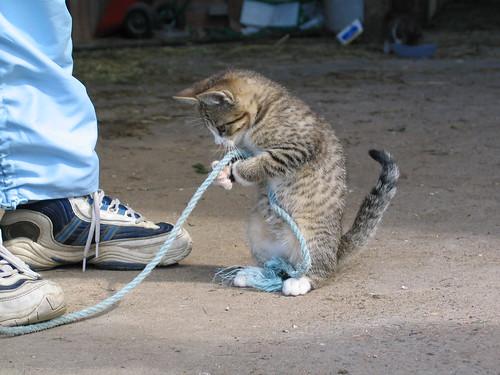 kitten picture_4