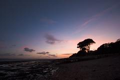 Twilight shore (Skink74) Tags: uk sunset sea tree 20d silhouette evening hampshire shore groynes lepe canon1022f3545