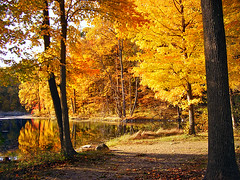 Ablaze (Nicholas_T) Tags: autumn trees lake rural forest newjersey foliage brightlight creativecommons deciduous ghostlake shadesofdeathroad warrencounty jennyjumpstateforest jennyjumpmountain easternnorthamericanature jennyjumpstatepark