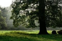 P1040212-b (Pieter Musterd) Tags: park tree green groen boom parc natuurmonumenten landgoed pieter007 schaepenburgh