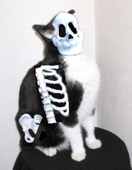 Spew Warning - Montana the Cat's Halloween Costume (Pixel Packing Mama) Tags: tag3 taggedout funny awesome tuxedocats letsplaytagyoureit excellent catsandkittensset brilliant funnyhaha hilarity exclamationpoints 510favorites montanathecatset heartlandhumanesociety pixelpackingmama taggedoutthegraduatesofletsplaytag dorothydelinaporter worldsfavorite taggedoutproudofitset thegameofphotoassociation spewwarning montanathecat~fanclub catcentury reallyunlimited favoritedpixset mostinterestingaccordingtoflickralgorithmset spcacats lolcats montanathecatshalloweencostume chiropracticnightmare photoshoppedfuncats crazyaboutcats~happyhalloween~commentoneontheright lmaogrouppool commentedwithsnort montanawasasheltercat tuxedocatspool exclamationpointspool pixwithexclamationpointsincommentsset halloweenworldwide views1000andupdomesticcatsonlypool uploadedsecondhalfof2006set exclamationpointsincommentsset blackandwhitewhiteandblackwanttoseejustblackandwpool blackandwhiteanimalsbirdsetcpool catsaremyfriendsfriendofthemonthvoteseptemberpool ourhalloweengrouppool watchfor7000 oversixmillionaggregateviews over430000photostreamviews