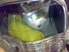 07102006286.jpg (judey) Tags: cat twinkle