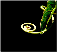 Looks like some feelings (Silvia de Luque) Tags: naturaleza plant black verde green planta nature spiral negro espiral tem feelings sentimientos ofy alhambra2006 silviadeluque photofans bsofy
