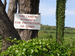 Poisoned for protection (danpea) Tags: ireland tree green eh sign funny sheep farm eire what daft confusing bonkers roi poisoned danpea