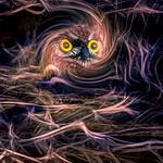 Nesting thumbnail