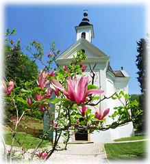 Church with magnolia (Szemeredi Photos/ clevernails) Tags: hungary church palace arboretum magnolia flower spring garden outdoor frame walk walkingtour