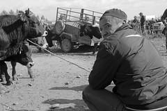 The Cattle Auction (peterkelly) Tags: bw digital canon 6d asia kyrgyzstan karakol livestockauction man hat trailer gadventures centralasiaadventurealmatytotashkent rope leash cow cattle