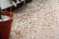 La tormenta de granizo (Micheo) Tags: spain tormenta storm granizada granizo destrozo destruction hailstorm desastre pena upset triste desolación