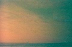 Lone Bird Flying off into the Sunset (Joe_R) Tags: bird film lomoredscale beach grain canon rebelg