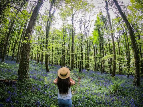 Gopro Bluebells Ireland
