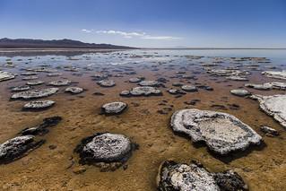 Estromatolitos modernos del Salar de Atacama