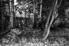 Trees BW (martin.bruntnell) Tags: trees towpath stourbridge bw
