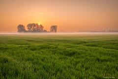 Foggy Fields (Harold van den Berge) Tags: akker axel boerderij bomen canon1635lf4 clouds dawn farm field fog haroldvandenberge landscape landschap leefilter lucht mist netherlands nevel outdoor sky sun sunrise tree wolken zeeland zeeuwsvlaanderen zon zonsopkomst