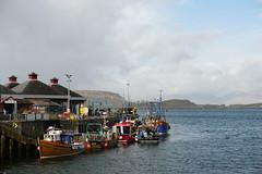 DSC00918 (robertdewar345) Tags: boats harbor quayside fishing islands