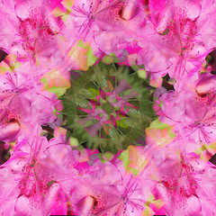 Hawaiian Flower Kaleidoscope (Sdebord16) Tags: macro garden flower pink flowers green kaleidosocpe colors colorful dots pattern nature blossom hawaii tropical spring summer leaf kaleidoscope color warm vacation tropic trpical beach relax relaxing spot spots frecle frecles