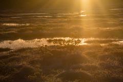 Exploring sunrise light on frozen marsh (light exposure) (talaakso) Tags: auringonnousu heijastus hyvinkää nikkor28300 nikon nikond610 ridasjärvi ritassaarensuo soluppgång sonnenaufgang sunrise terolaakso auringonvalo aurinko exposure golden gyllene kultainen lightexposure luontokuva marsh myr nature naturelandscape reflection sol sunlight suo suomaisema talaakso finnishbog finnishmarsh myrmark finland ruralfinland rural frozen frozenmarsh kuura jäätynyt