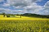 Ombre et lumière (Excalibur67) Tags: nikon d750 sigma globalvision 24105f4dgoshsma paysage landscape ciel cloud sky spring printemps frühling arbres trees nature colza campagne jaune yellow nuages