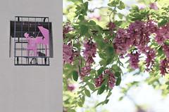 MMM Freestyle (Carrie McGann) Tags: hmmm mosaicmontagemonday montage music piano tree purplerobelocust flowers blossoms freestyle nikon interesting