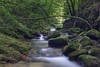beFlexible (tobias-eger) Tags: nature landscape green water creek stones outdoor travel blackforest spring forest wooden natur landschaft bach steine reise wasser grün frühling