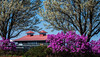 Boathouse azaleas (LEXPIX_) Tags: boat house boathouse burlington waterfront vermont vt azaleas apple blossoms plumage foliage blooming mothers day sunday weather colorful chromatic scenery nikon d500 70200 lexpix