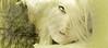woman-19 (Poli Maurizio) Tags: woman girl female sketch portrait drawing drawingportrait abstractportrait digitalportrait actress actor celebrity hollywood pencil coloredpencil pencilportrait freehand fine art sky blackandwhite color beauty water hair artist disegno ritratto schizzo manolibera occhi chiaroscuro matita dibujos fantasy fantastic facebook twitter linkedin pinterest instagram tumblr bouchac indoor outdoor italy baby sicily ocean sea sun snow clouds man barocco illustrazione naturalism background bed concept grey conceptart atmosferic watercolor technique surrealism 3dweddingpartyfamilytravelfriendsjapanvacationlondonbeachcaliforniabirthdaytripnycsummernatureitalyfrancemeparisartflowerssanfranciscoeuropechinaflowernewyorkwaterpeoplemusiccameraphone 3daustraliachristmasusaskygermanynewcanadanightcatholidayparkbwdogfoodsnowbabysunsetcitychicagospaintaiwanjulybluetokyoenglandmexicowinterportraitgreenred 3dpolimaurizioartworkredfunindiaarchitecturegardenmacrospringthailandukseattlefestivalconcertcanonhouseberlinhawaiistreetlakezoofloridajunemaywhitevancouverkidstreecloudstorontobarcelonageotaggedhome 3dbwbwdigitalseadaytexasscotlandcarlighthalloweencampingchurchanimalstreeswashingtonrivernikonaprilbostongirlirelandgraffitiamsterdamrocklandscapeblackandwhitecatsnewyorkcitysanromeroadtripurbanhoneymoonocean 3dwatercolorsnewzealandmarchblackmuseumyorkhikingislandmountainsyellowsydneysunhongkongshowgraduationcolorfilmmountainanimallosangelesschoolmoblogphotodogs 3dartdesigndisegnosiciliacalabriabasilicatacampaniamarcheabruzzomoliselaziotoscanaemiliaromagnalombardiavenetofriuliveneziagiuliapiemontevalledaostaliguriatrentinoaltoadigepuglia 3dlandscapepaesaggiolunasolemarenuvolecittàtramontoalbamontagnecollinenebbialuceautomobilearredamentointerniesterninaturamortacieloragazzadonnauomobambinofruttabarca 3dcanigattirinascimentomodelbarocconaturalismomattepaintingfuturismoastrattismocubismosurrealismorealismoiperealismoclassicismorococomanierismoromanticismoimpressio