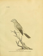 n226_w1150 (BioDivLibrary) Tags: birds classification pictorialworks smithsonianlibraries bhl:page=33261149 dc:identifier=httpsbiodiversitylibraryorgpage33261149 johnlatham