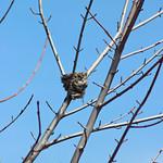 Bird Nest thumbnail