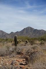DSC01572 (Kate Hedin) Tags: frank lloyd wright flw taliensin west desert tour cactus plant architecture apprentice cottage land mountains hills terrain