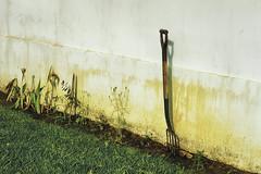 Garden Fork At The Wall (Modkuse) Tags: gardenfork garden fork wall contaxrangefinder zeiss zeisssonnar zeisscontaxrangefinder zeiss50mm zeisssonnar50mmf17 sonnar 50mm kodak kodakslide kodachrome kodachromeii slidefilm slide transparency