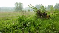 Misty Minto Brown (briangeerlings) Tags: sigmadp2merrill merrill sigma dp2m foveon landscape green nature mintobrownislandpark salem oregon
