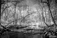 Le ruisseau Sabrevois IR Full Spectrum B&W (Steve Troletti™ Nature & Wildlife Photographer) Tags: bw diy nb arbres boucherville canada eau filter fullspectrum grandmontreal infrared ir leaves monochrome printemps quebec river spring stream trees water